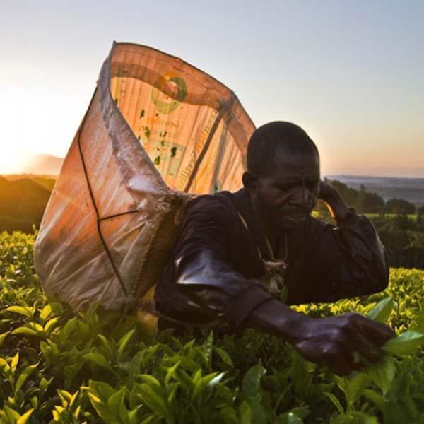 Ranfer Malawi